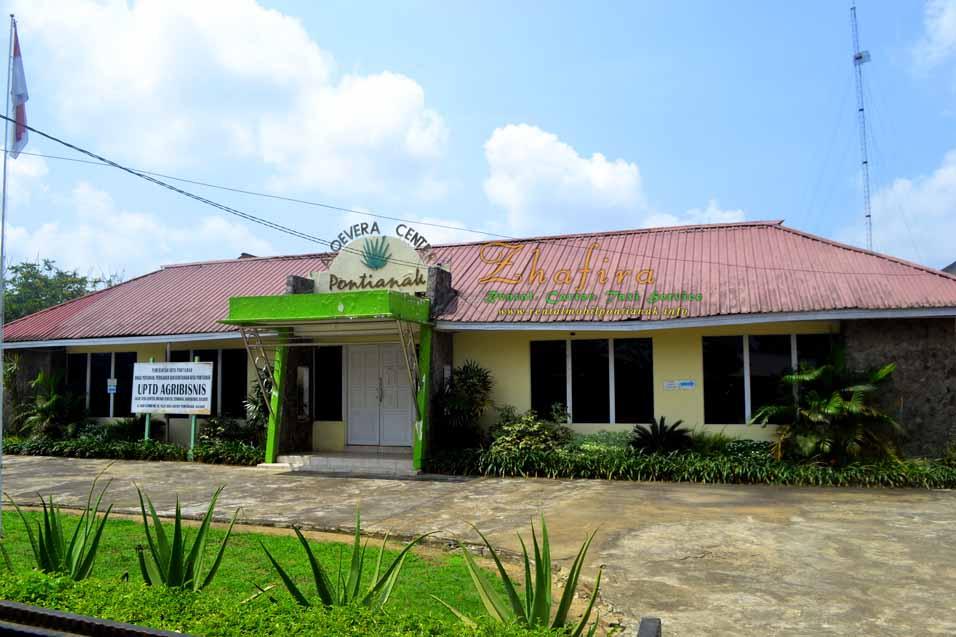 Aloevera Center – Sentra Agribisnis Lidah buaya