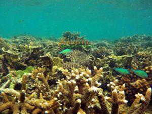 wisata dunia bawah laut pulau lemukutan bengkayang, kalimantan barat, snorkeling kalimantan barat, menyelam kalimantan barat,